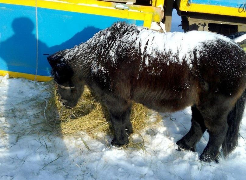 Граждан Самары призывают посодействовать звериным нефтегорского зоосада мясом, орехами иовсом
