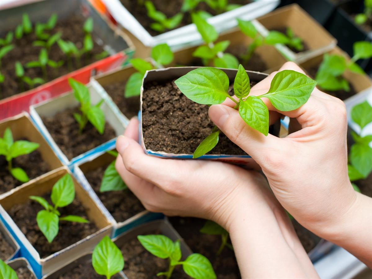 Как выбрать самые лучшие семена на рассаду – советует СПЕЦИАЛИСТ