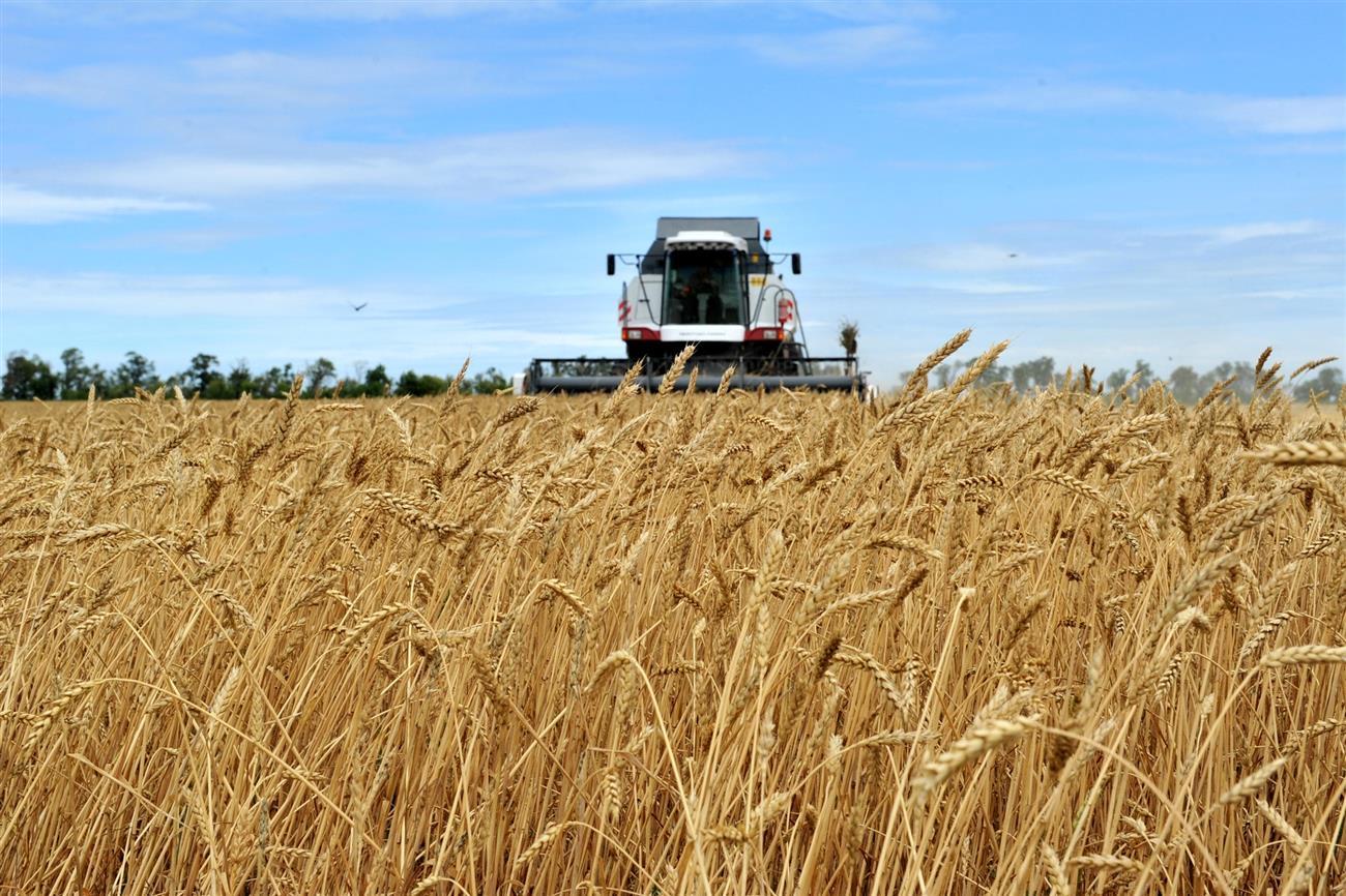 Тонна зерна в оренбургской области