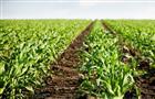 В Удмуртии до конца 2020 г. планируется ввести в оборот 64 тыс. га неиспользуемых земель сельхозназначения