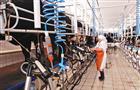 Венгры построят в Мордовии молочный комплекс к началу 2020 года