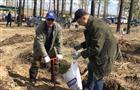 Депутаты Думы Тольятти возрождают городской лес