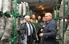 """Самарский производитель грибов """"Горный холод"""" наращивает мощность до двух тонн в сутки"""