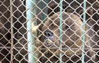 Зоотехник самарского зоопарка осмотрел медведей, которых хочет продать владелец кафе