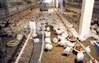 """На """"Васильевской птицефабрике"""" и площадках """"Пензамолинвест"""" введен карантин по птичьему гриппу"""