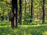 В этом году в регионе 23 человека отравились грибами
