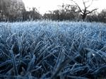 В Самарской области ожидаются заморозки