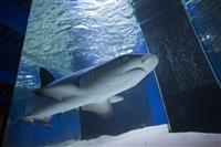 "ТЦ""АМБАР"" захватил рыбный десант воглаве ссамой настоящей акулой"