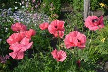 Составляем рейтинг самых неприхотливых цветов для сада