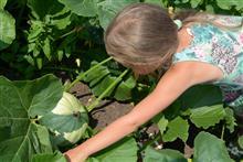 Выращиваем бахчевые культуры на шести сотках