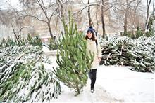 Как выбрать новогоднюю елку и не прогадать