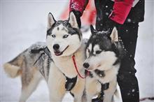 Где самарцам покататься на собачьих упряжках, на лошадях и на снегоходах