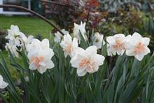 Сажаем луковичные осенью, чтобы создать цветущий сад весной