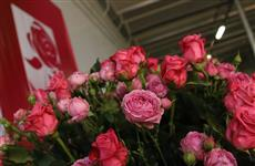 Мордовский производитель роз займет 15% рынка России