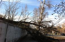 На ул. Аэродромной на тротуар упало дерево
