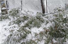 Администрация: дерево, упавшее на женщину с ребенком, было трухлявым