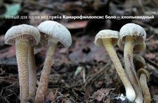 В Жигулевском заповеднике найдены новые виды грибов