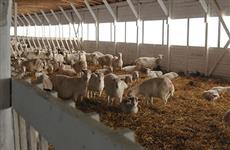 В Марий Эл открыта крупнейшая в России козья ферма
