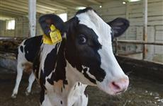 Удмуртия продолжит реализацию программы развития молочного животноводства