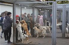Нижегородские школьники сдали макулатуру, чтобы купить лекарства для бездомных животных
