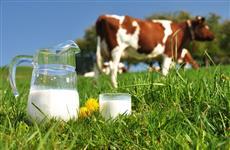 Начинающим фермерам в два раза увеличат гранты на молочное животноводство в Ульяновской области
