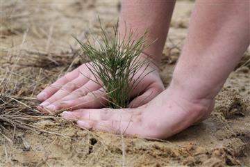 Экоконкурсы формируют экологическую культуру