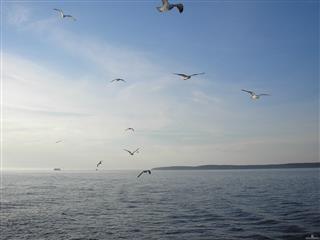 Избежит ли Волга экологической катастрофы?