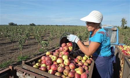 В регионе возрос интерес инвесторов к садоводству