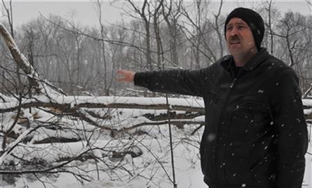 """Гендиректор """"Арго-Моторс"""" не понесет наказания за вырубку деревьев на Сорокиных Хуторах"""