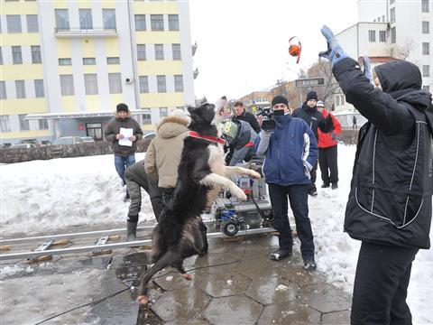 """Собаки, снимающиеся в фильме """"Елки 3"""", получают зарплату наравне с актерами (видео)"""