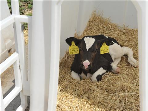 """Молочная ферма """"Экопродукт"""" планирует увеличить поголовье и расширить производственные мощности"""
