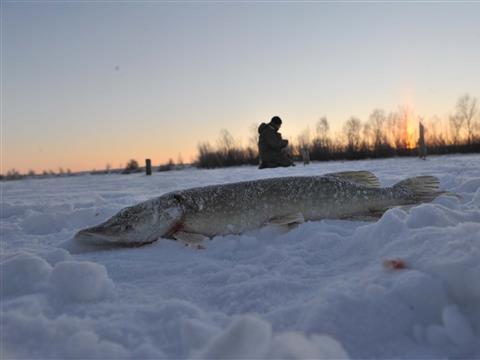 Новогодние праздники надолго запомнятся самарским рыболовам