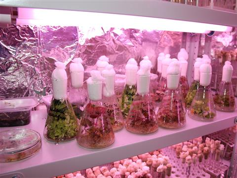 Резиденты технопарков создали уникальную смазку и биотехнологию выращивания безвирусного семенного материала