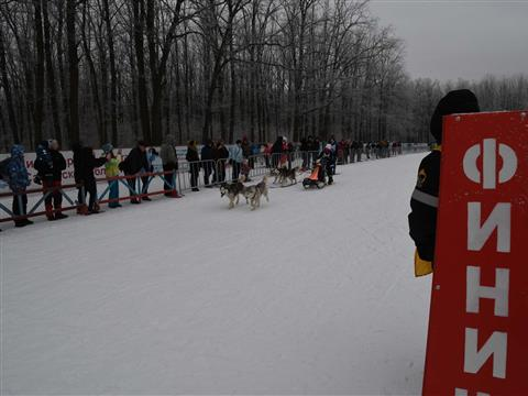 Рождественские гонки на собачьих упряжках