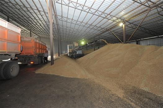 «АПК и Пищепром» выяснил,  за счет каких сельхозкультур аграрии собрали рекордный урожай зерна и заканчиваются ли на этом региональные рекорды.
