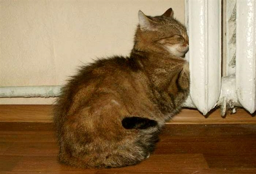 отопление кошка.jpg
