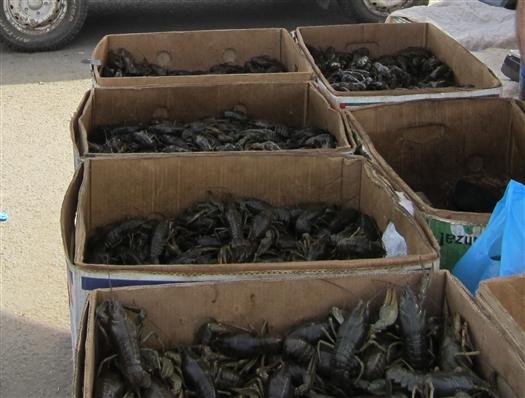 Штрафы за незаконный сбыт рыбы и раков планируют увеличить до 75 тыс. рублей