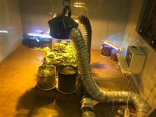 На складе в Тольятти выращивали марихуану