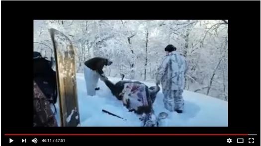 Принтскрин с видео, обнаруженного в телефоне охотинспектора