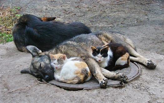 Бездомными собаками и кошками займутся местные власти