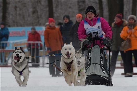 В Самаре прошли соревнования по ездовому спорту