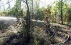 На острове Поджабный горело 1,5 га леса