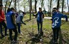 120 молодых деревьев украсили Парк Победы в Кинеле