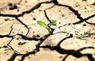 Хозяйства Оренбуржья из-за засухи понесли потери более чем на 1 млрд рублей