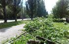 На ул. Стара-Загора сносят липовую аллею для замены тепломагистрали