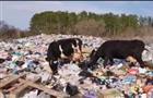Администрация Рождествено судится с жителями за участок земли под свалкой