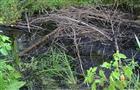 Разлив нефти под Новокуйбышевском мог произойти из-за незаконной врезки