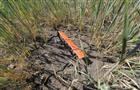 Затянувшаяся жара угрожает оставить аграриев без урожая в 2011 году