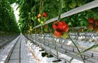 В новый тепличный комплекс в Чусовом вложат свыше 7 млрд рублей