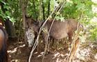 Жителя Чапаевска подозревают в краже пяти лошадей в Безенчукском районе